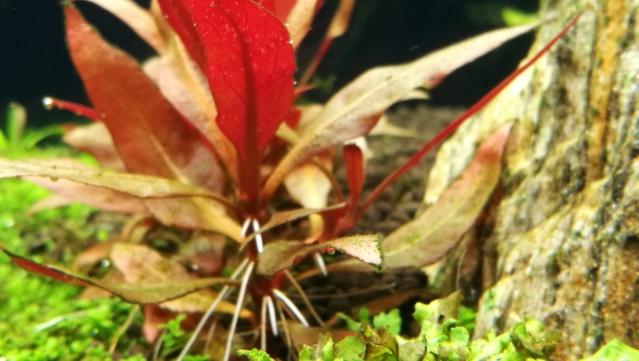 taches noires sur plusieurs plantes - Page 5 Img_2033