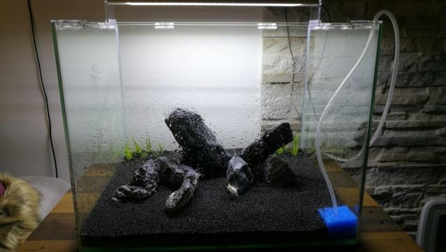 Présentation de mon nouveau nano 55 litres Img_2046
