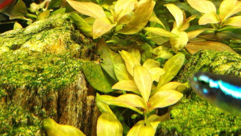 taches noires sur plusieurs plantes - Page 5 Img_2075