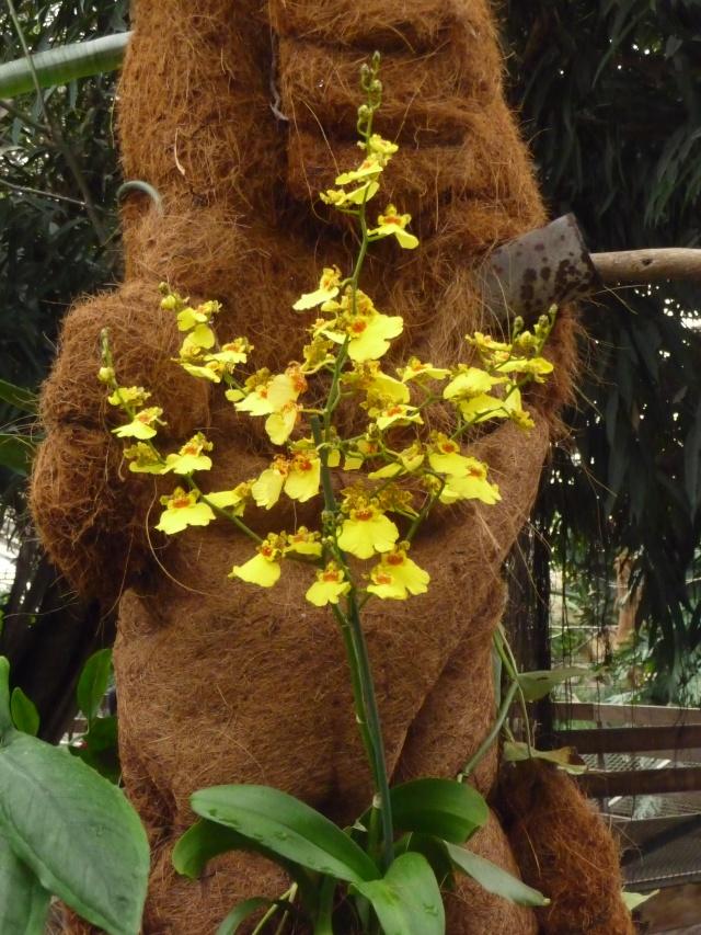 Orchidées à la ferme aux crocodiles P1190419