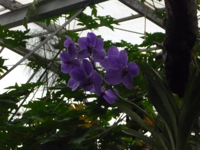 Orchidées à la ferme aux crocodiles P1190421