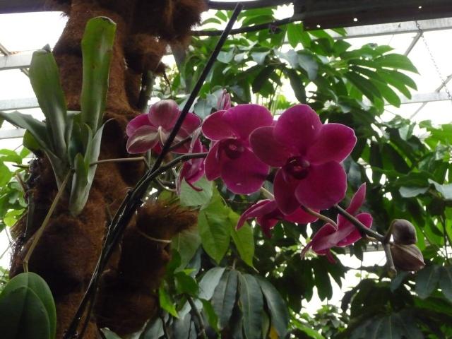 Orchidées à la ferme aux crocodiles P1190422