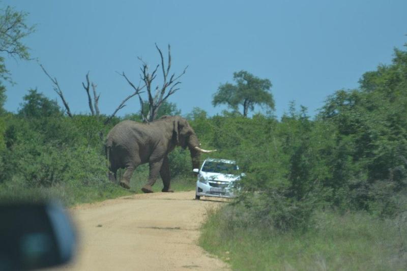 Olifant Rol kar in Kruger 2012-11-13 B4076310