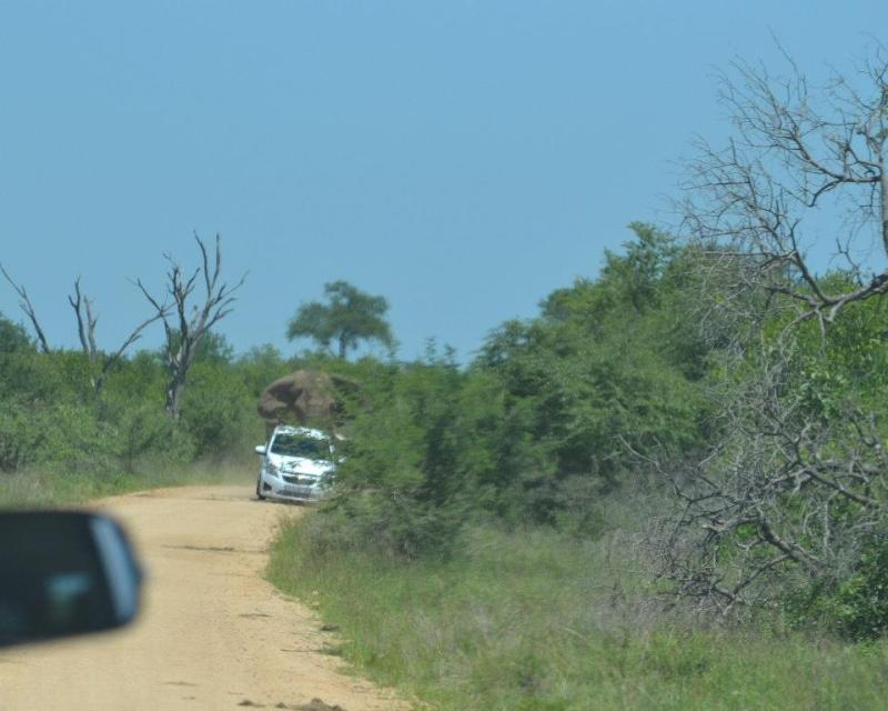 Olifant Rol kar in Kruger 2012-11-13 C1825510