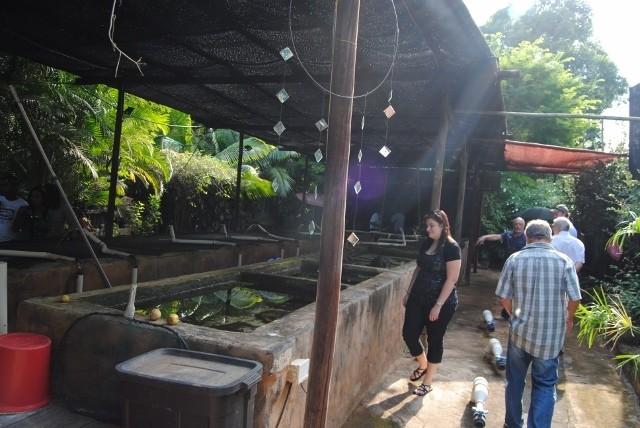 KZN North Koi pond Safari Dsc_0346