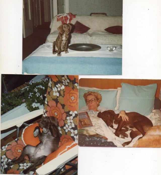 SWAN MON SOUSSOUNET ET SA NINOCHKA SON UNIQUE AMOUR Img19810