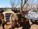 Mini-séjour à Marrakech P1020134