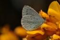 papillons précoces Dsc_0411
