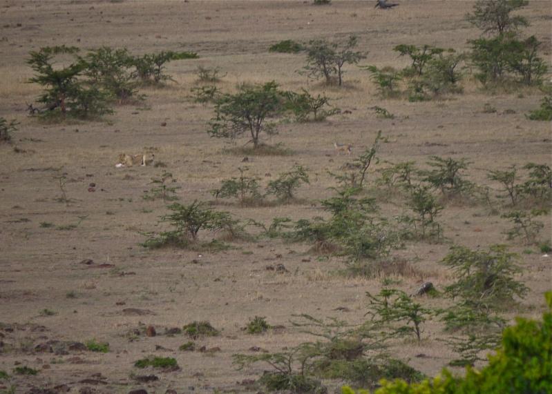 Life and Death on the Mara, Dec. 2012 P1050510