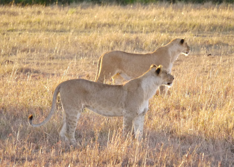 Life and Death on the Mara, Dec. 2012 P1050810