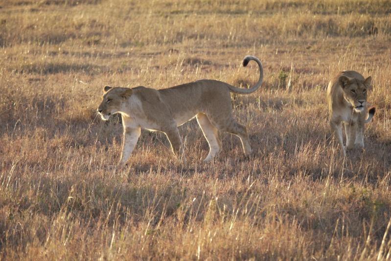 Life and Death on the Mara, Dec. 2012 P1050812