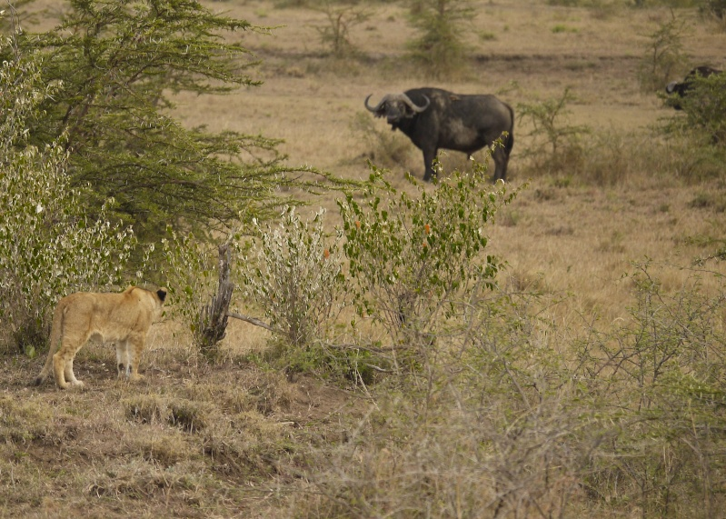 Life and Death on the Mara, Dec. 2012 P1060413