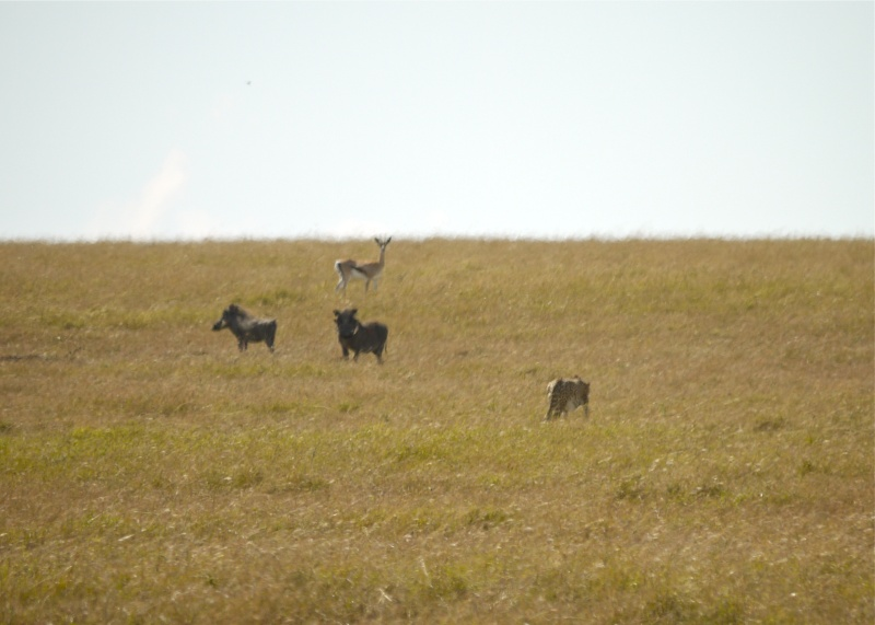 Life and Death on the Mara, Dec. 2012 P1060416