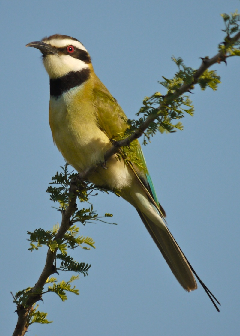 Birds of Meru National Park, Kenya, Dec.2012 P1070010