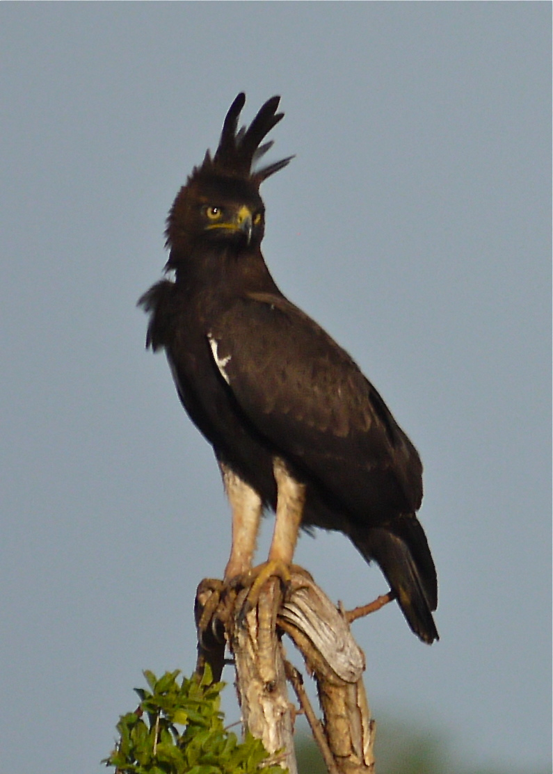 Birds of Meru National Park, Kenya, Dec.2012 P1070211