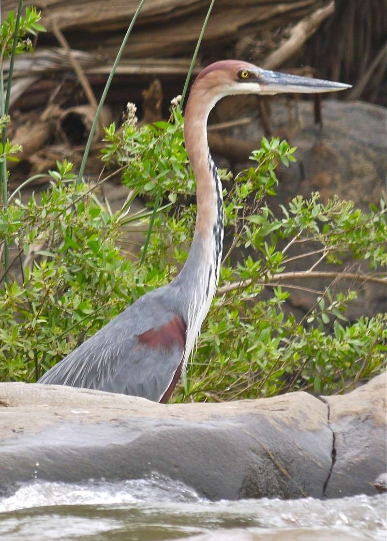 Birds of Meru National Park, Kenya, Dec.2012 P1070713