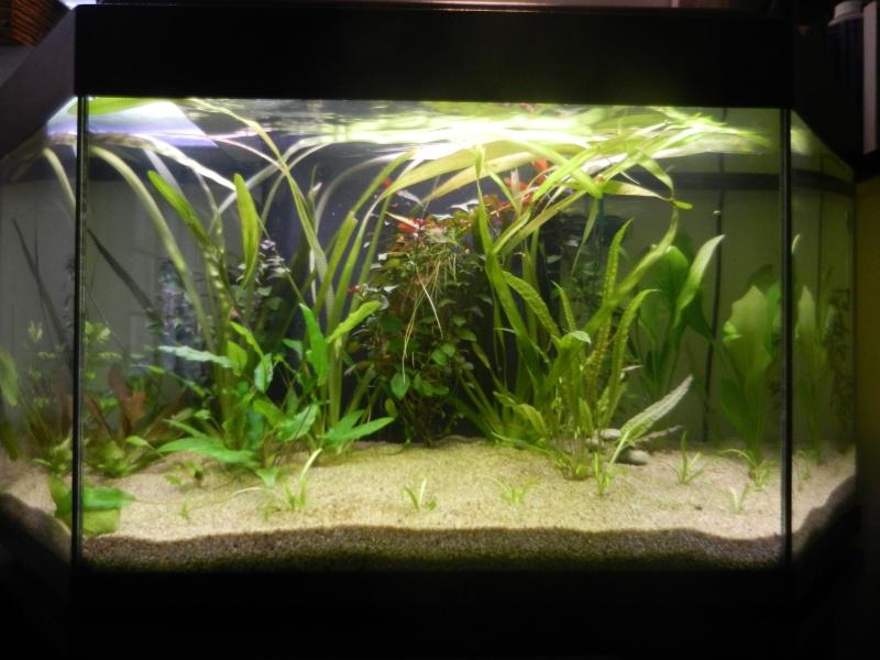 l'aquarium du crestois Dscn1110