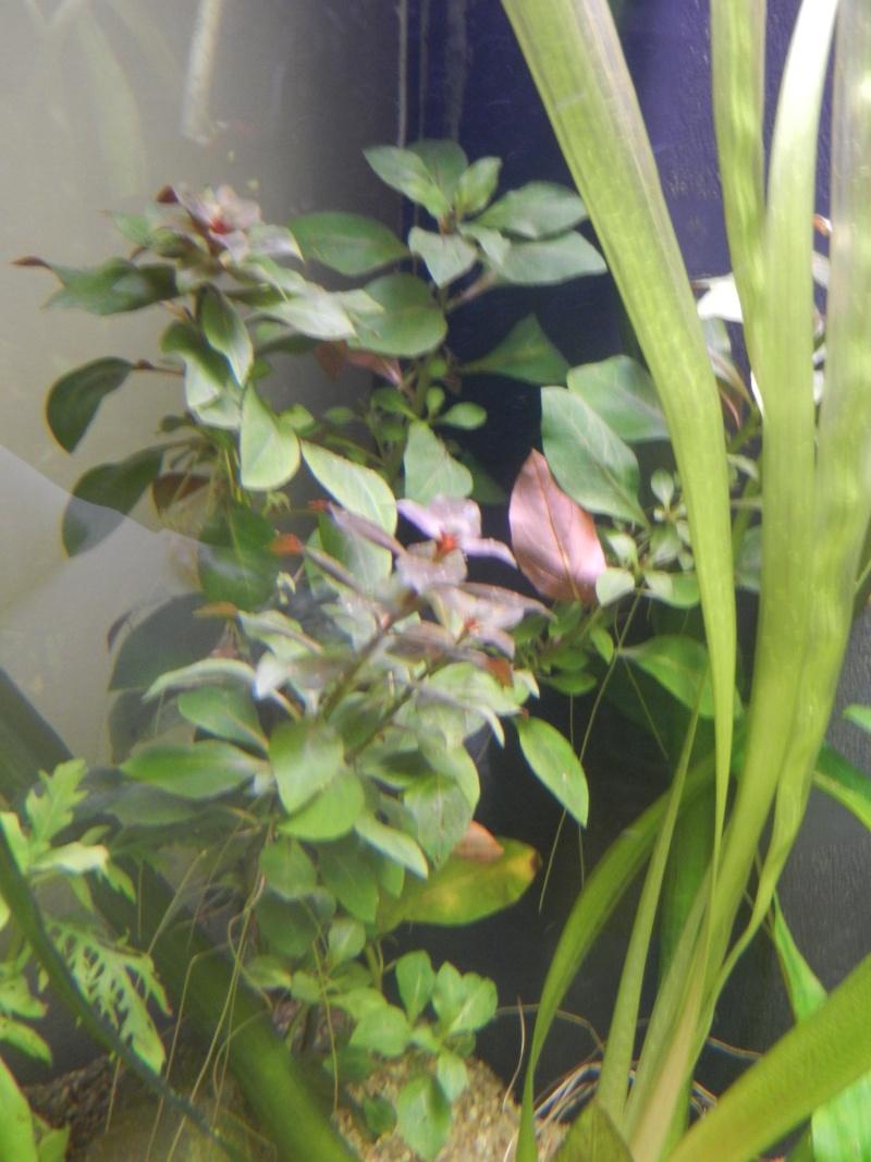 l'aquarium du crestois Dscn1115