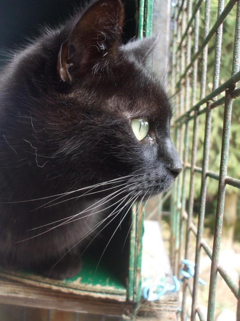 Chats noirs - Page 2 Titi10