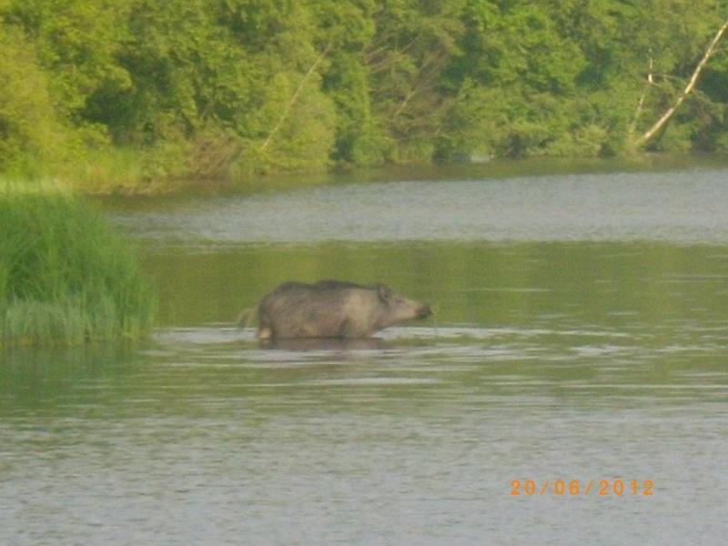 photo du lac des vieilles forges 53824510