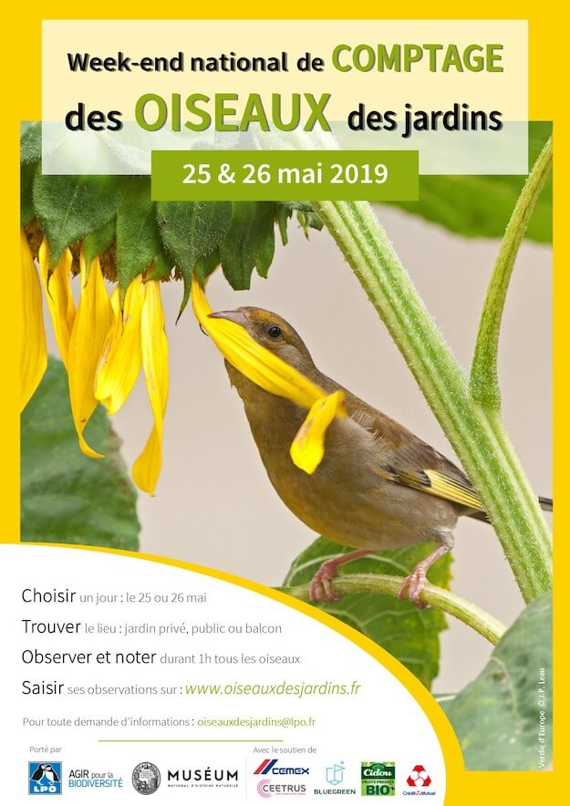 comptage des oiseaux au jardin Compta10
