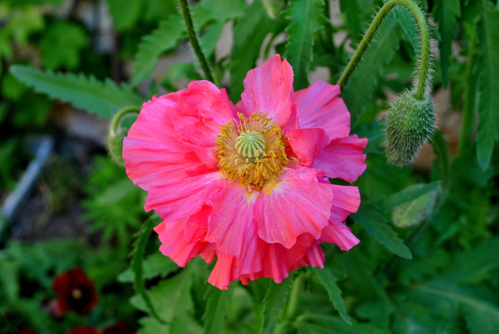 Air d'été au jardin - Page 2 Dsc_0111
