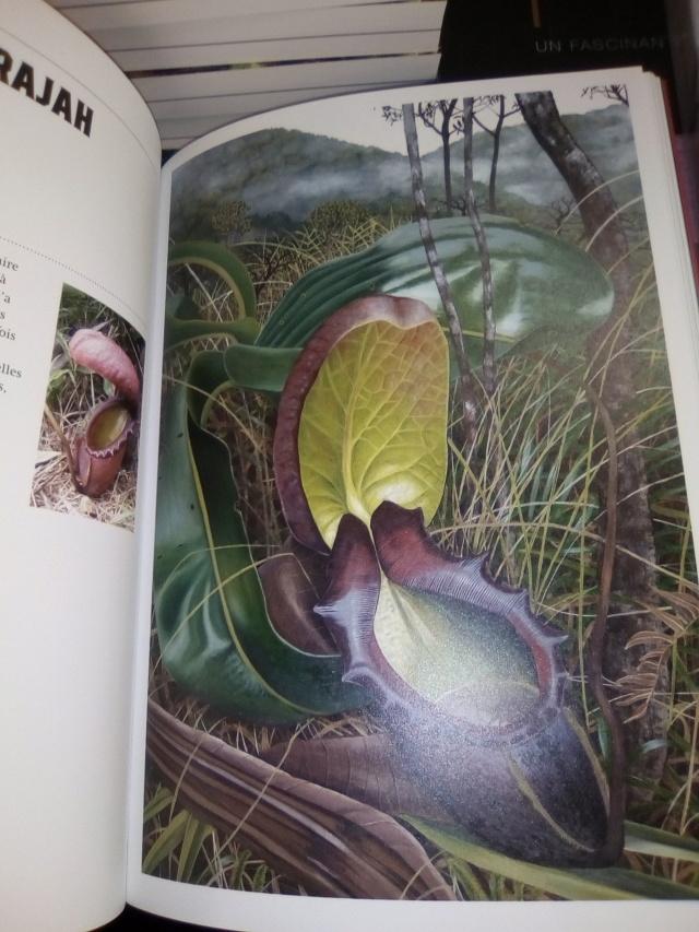 Chris Thorogood, Plantes bizarres Img_2013
