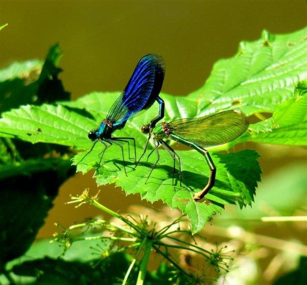 """Déficoncours """"Les insectes sur les plantes"""" - les participations Libbe10"""