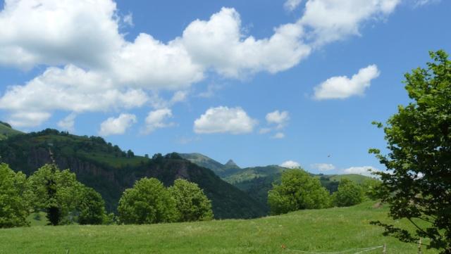 Balades dans le vert Cantal - Page 2 P1060610