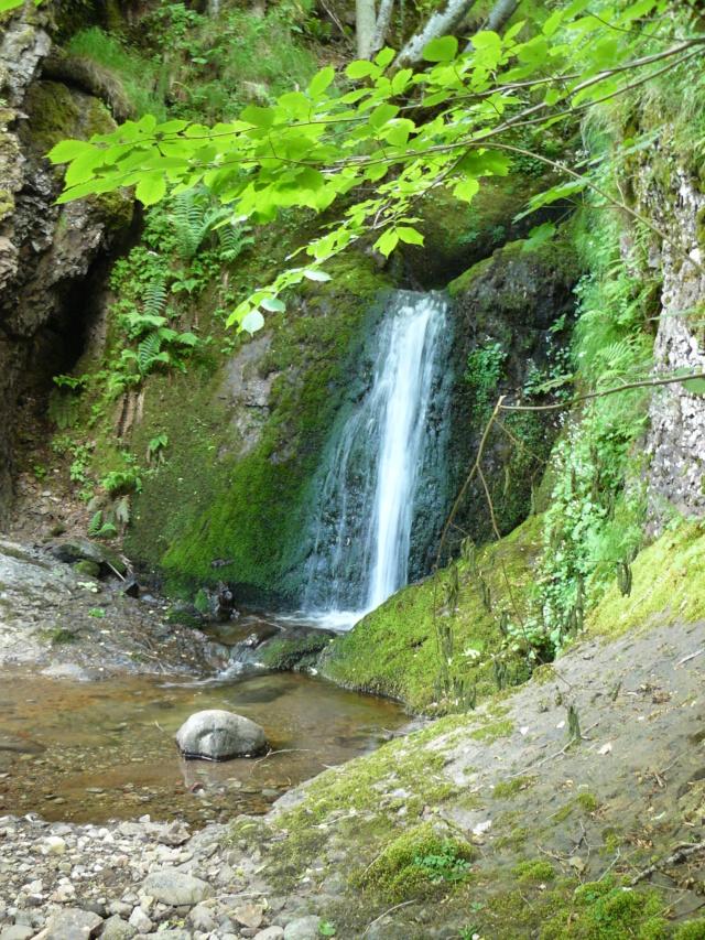 Balades dans le vert Cantal - Page 2 P1060611