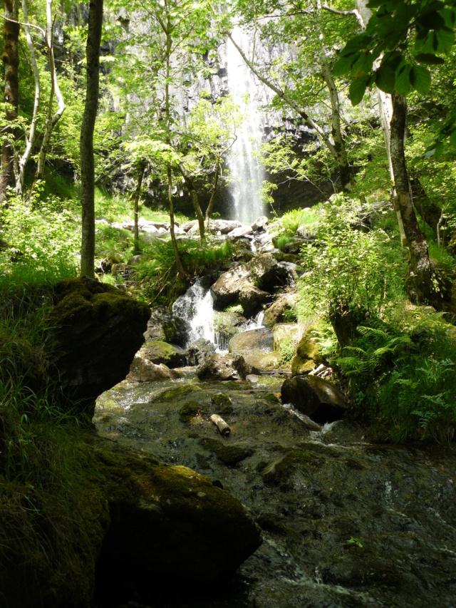 Balades dans le vert Cantal - Page 2 P1060711