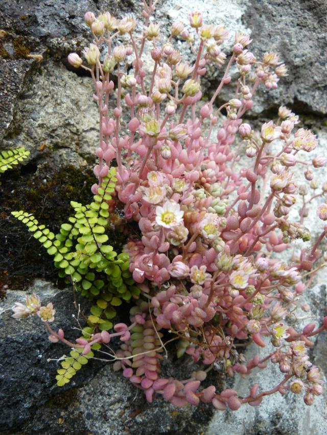 Balades dans le vert Cantal - Page 2 P1320512