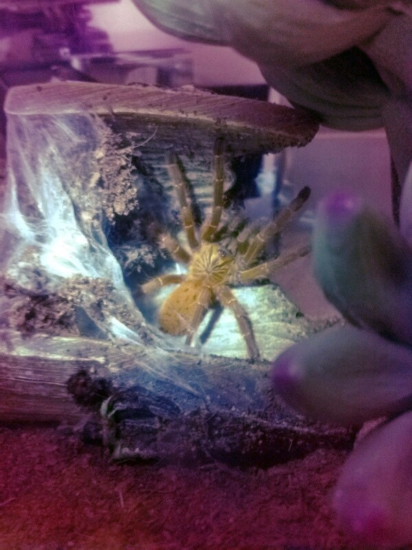 New OBT and cage conditions werent to my liking... Fxcam_11