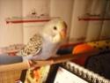Pongo ou Perdita??? ^^ - Page 2 Dscf2012