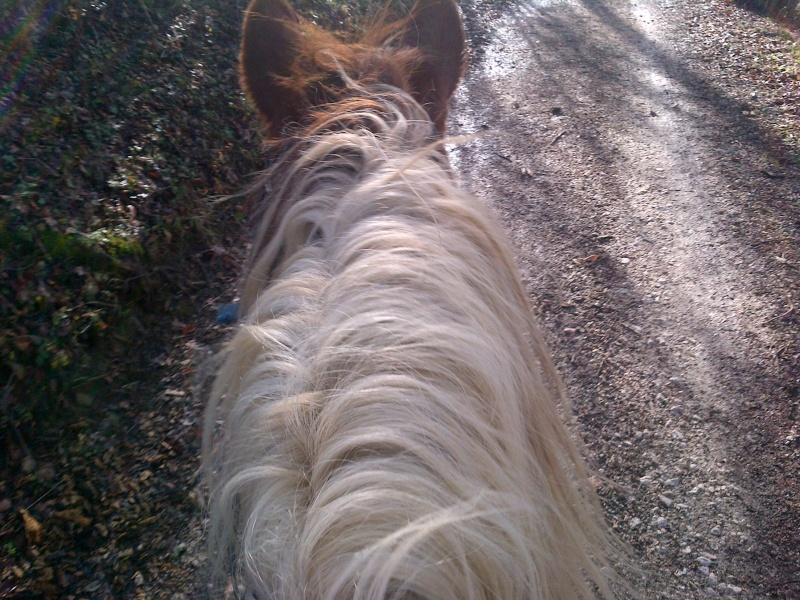 CALINOU  - ONC poney - né en 1999 - adopté en novembre 2012 par Stéphanie - Page 5 Notre-10