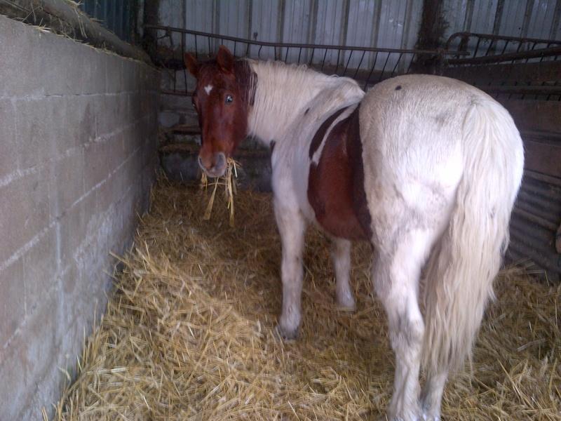 CALINOU  - ONC poney - né en 1999 - adopté en novembre 2012 par Stéphanie - Page 5 Notre-12