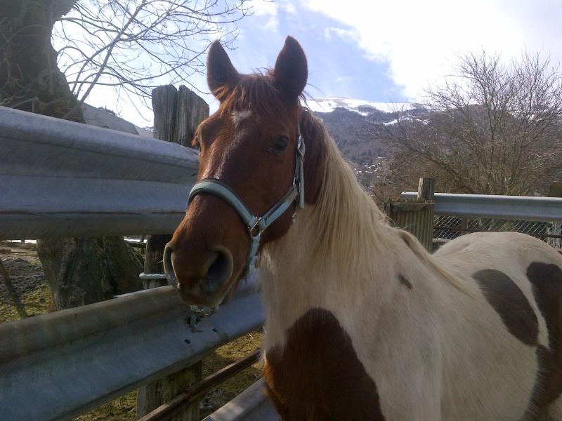 CALINOU  - ONC poney - né en 1999 - adopté en novembre 2012 par Stéphanie - Page 6 Notre-13