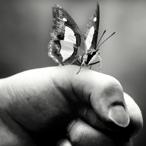 photos en noir et blanc - Page 9 Mod_ar11