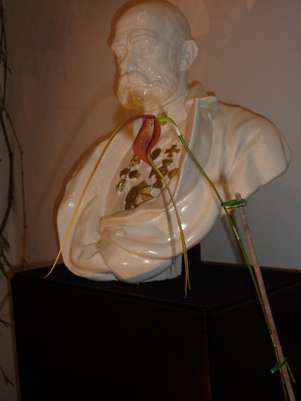 Orchideenausstellung Klosterneuburg 2013 Masdev10