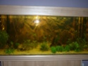 nouvelle version de mon aqua 180 Litres - Page 2 P1010310