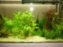 nouvelle version de mon aqua 180 Litres - Page 2 P1010314