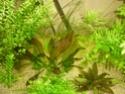 nouvelle version de mon aqua 180 Litres - Page 2 P1010317