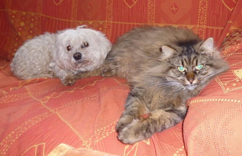 Frisouille - Croisé Bichon - Né en Juin 2009**** - Page 6 48381810