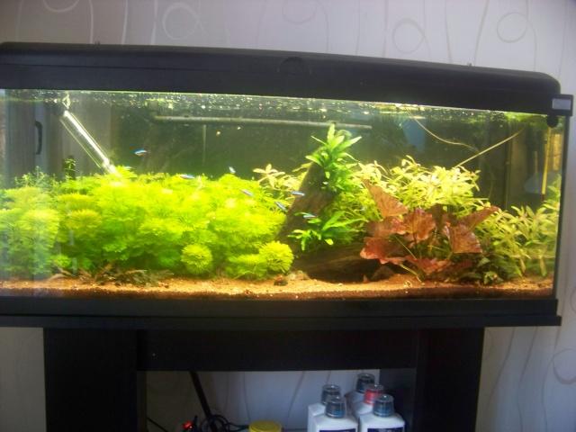 Mon aquarium 120L et mon aquarium 60L 00110
