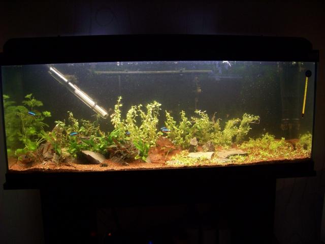 Mon aquarium 120L et mon aquarium 60L - Page 6 00112