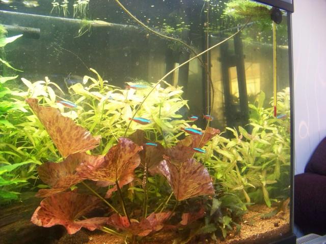 Mon aquarium 120L et mon aquarium 60L 00810