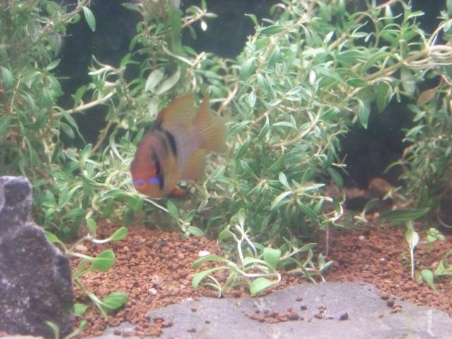 Mon aquarium 120L et mon aquarium 60L - Page 6 01211