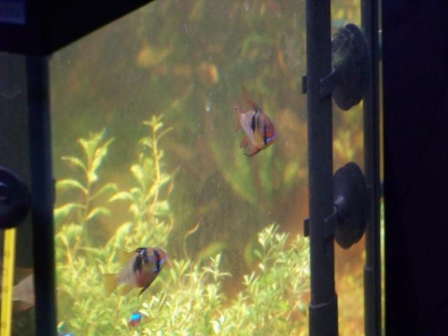 Mon aquarium 120L et mon aquarium 60L - Page 7 02110