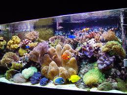 Subject Re Logans 55 Gallon Reef Tank Tue Mar 26 2013 640 Pm