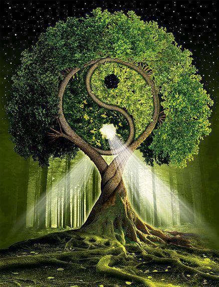 Les arbres Tao_va10